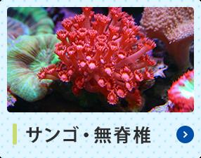 サンゴ・無脊椎